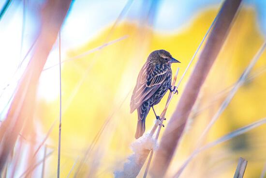 Vogel Natur