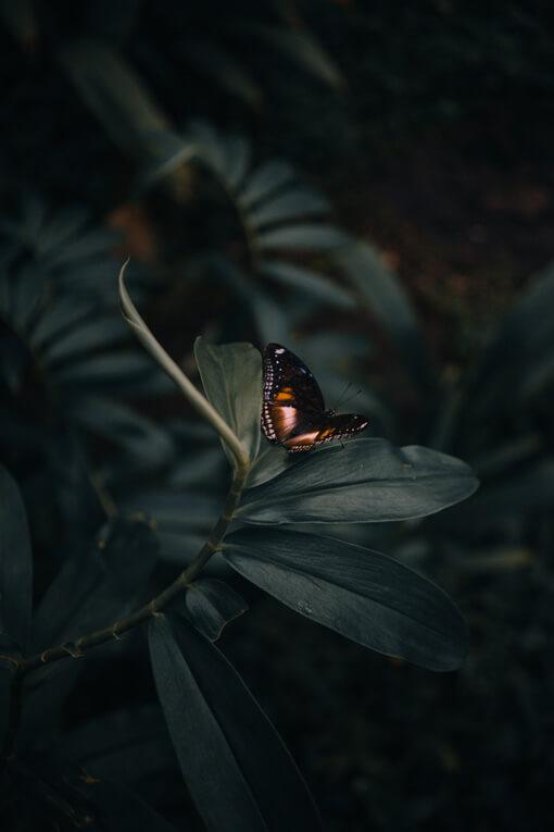 Schmetterling Blatt